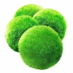 Luffy 3 Giant Marimo Moss Balls Pet Marimo Pet Store US SELL